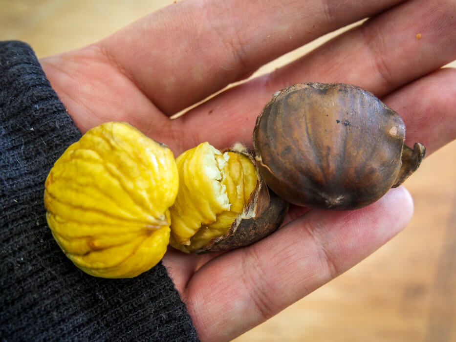 chestnut without soft inner shell