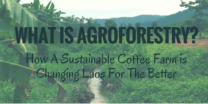 While visiting a coffee plantation in Laos, I learn what is Agroforestry and how it contributes to environmental social and economic sustainability.
