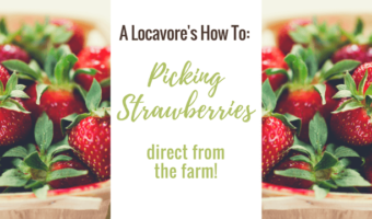 A Locavore's How To: Picking Strawberries. Celebrate the abundance of spring with berries & reconnect with nature & appreciate the seasonality of food.